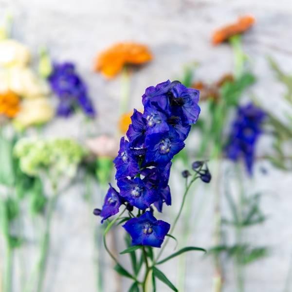 Galerie Fleurs Plantes 01
