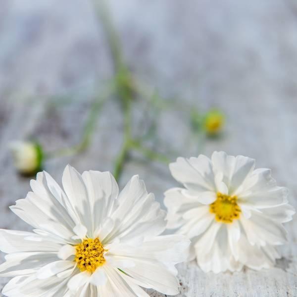 Galerie Fleurs Plantes 02