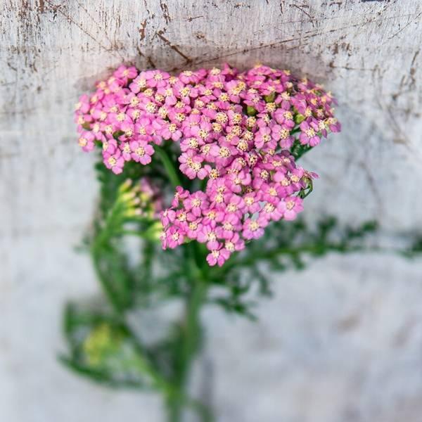 Galerie Fleurs Plantes 03