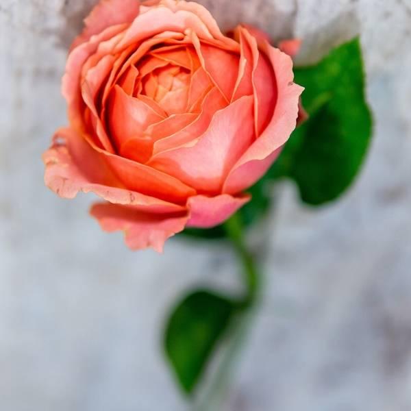 Galerie Fleurs Plantes 04