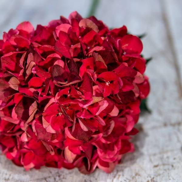 Galerie Fleurs Plantes 05