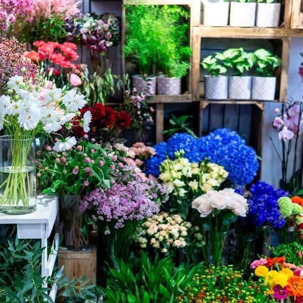 Galerie Fleurs Plantes 15