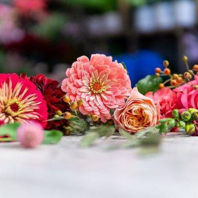 Galerie Fleurs Plantes 16 400x400