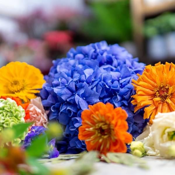 Galerie Fleurs Plantes 26