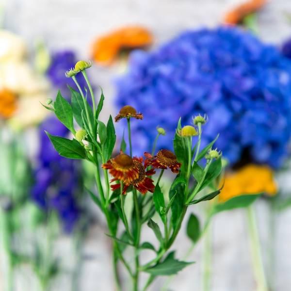 Galerie Fleurs Plantes 27