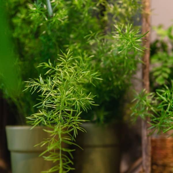Galerie Fleurs Plantes 29