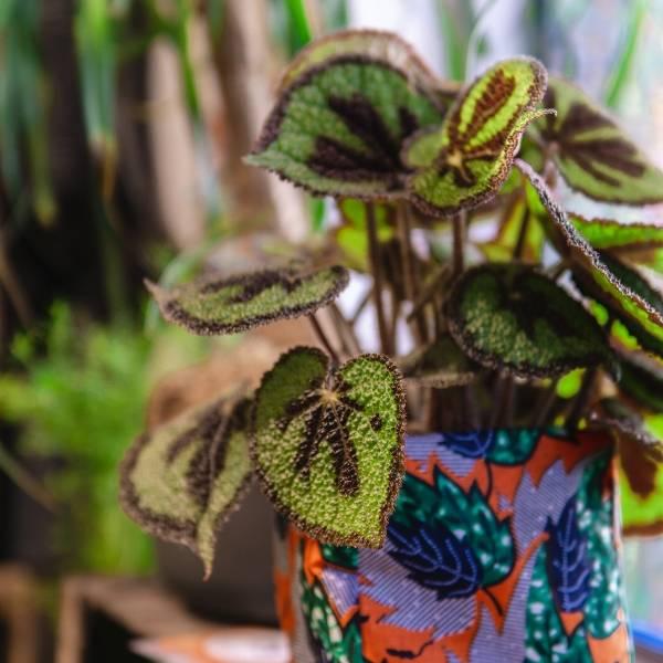 Galerie Fleurs Plantes 30