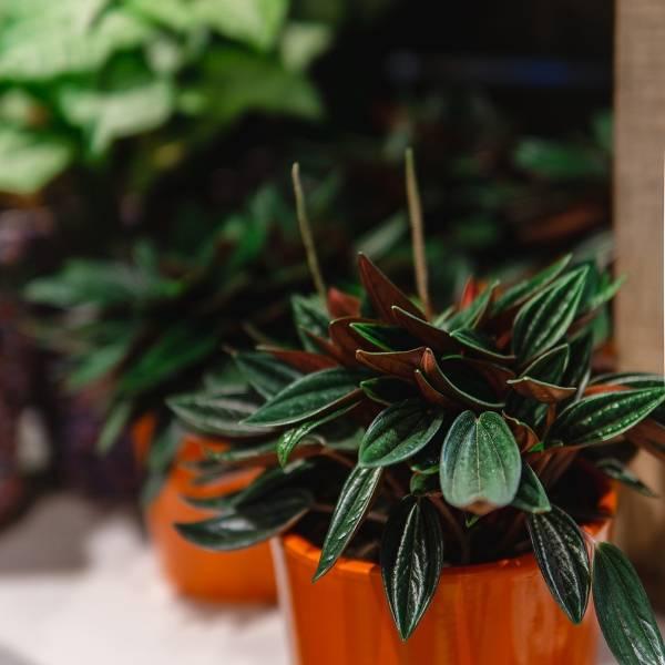 Galerie Fleurs Plantes 31