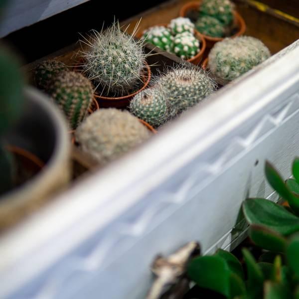 Galerie Fleurs Plantes 32