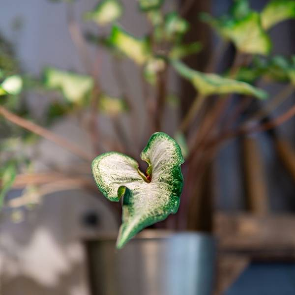 Galerie Fleurs Plantes 34