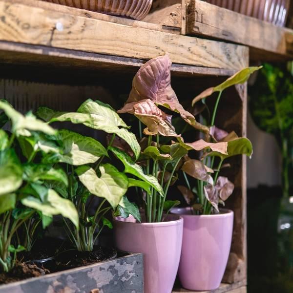 Galerie Fleurs Plantes 36