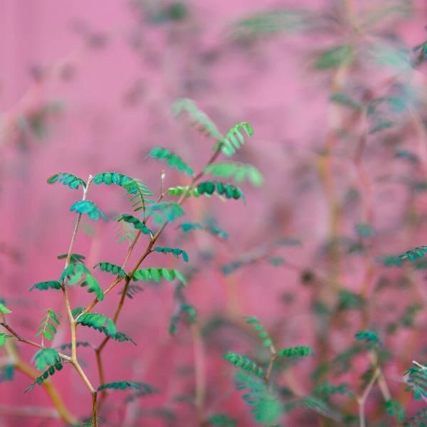 Galerie Fleurs Plantes 37