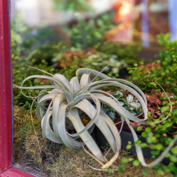 Galerie Fleurs Plantes 39