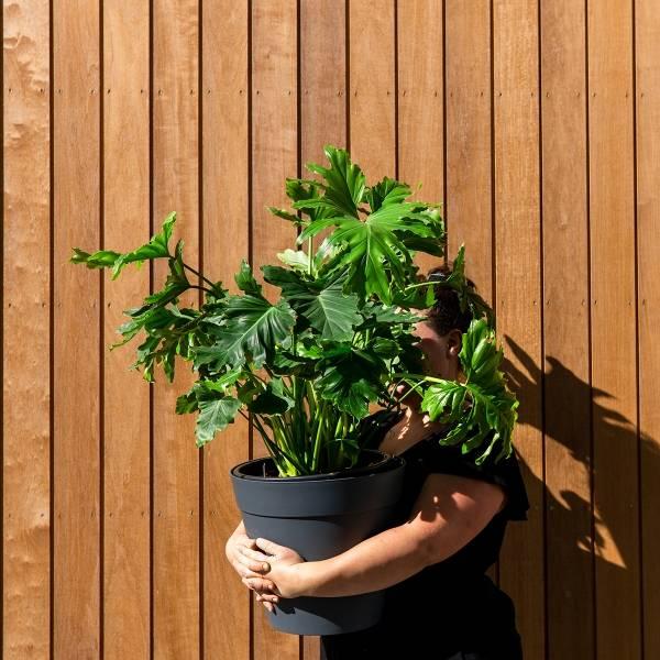Galerie Fleurs Plantes 42