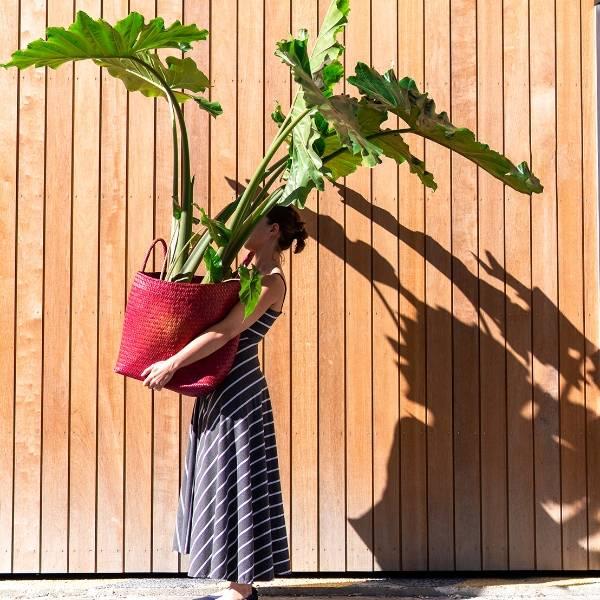 Galerie Fleurs Plantes 45