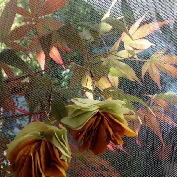 Galerie Fleurs Sechees 14