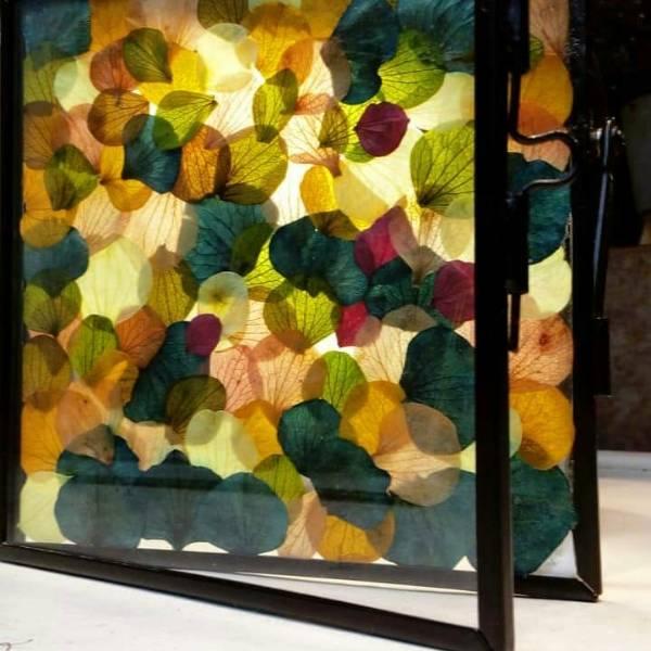 Galerie Fleurs Sechees 15